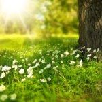 Le printemps: la saison de l'espoir