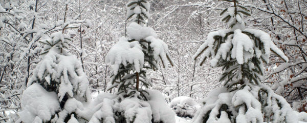 Winter im Saarland (Foto: Woll / Camäléon)